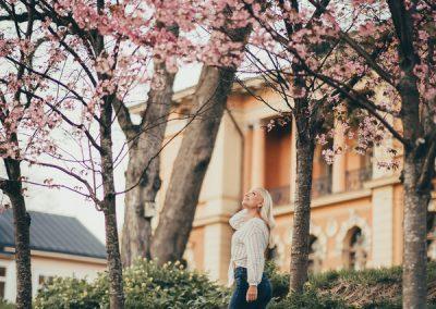 Alina kirsikkapuu 01392